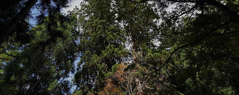 チマキ笹と新しい森づくりプロジェクト